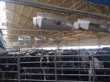 """ventilador de ventilação positivo do equipamento do celeiro de leiteria do ventilador de 72 """" Presure"""