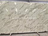 Lastre bianche del granito del Andromeda (nuovo bianco del Kashmir)