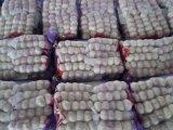 200g, 5PCS, aglio bianco puro fresco del pacchetto del sacchetto della maglia 4.8kg