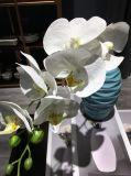 人工花、人工的なプラント、擬似花、人工的な蝶蘭の花