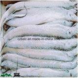 Congeladora, cámara fría, conservación en cámara frigorífica para cultivar y acuacultura