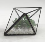O Terrarium artificial do cone das vendas quentes planta Succulent Potted