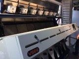 땅콩 색깔 분류하는 사람 기계