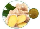 Выдержка имбиря 100% естественная: Gingerols 5% до 20%