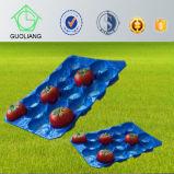 Vacío colorido de la fruta de la aprobación los 39X59cm/29X49cm/29X39cm PP del FDA que forma la bandeja plástica en categoría alimenticia