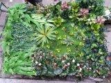 Piante di alta qualità e fiori artificiali della parete verde Gu-Wall05182937