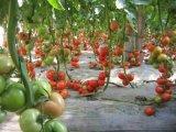 Concime biologico di Unigrow per qualsiasi piantatura di verdure