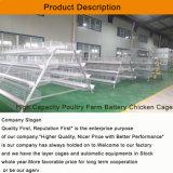 Système professionnel moderne de matériel de cage de ferme avicole pour le grilleur