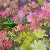 Usine de plastique à bas prix d'alimentation de la compensation de légumes maison nette d'insectes