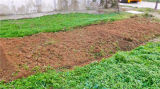 スキッドの雄牛のローダーで使用される農場か農業の回転式耕うん機