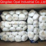 La nouvelle récolte de la Chine Exportateur à l'ail frais Prix de l'ail blanc pur