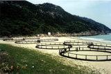 Cage de pêche de HDPE/PE en mer profonde