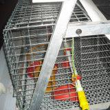 Стальных оцинкованных птицы куриные слоя каркаса/ Pullet отсека для жестких дисков