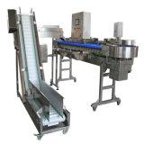 Le tri automatique du poids de la machine pour le poisson et fruits de mer/fruits avec le convoyeur
