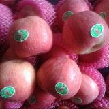 Frisches neues Getreide FUJI Apple