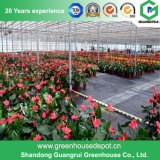 꽃 또는 과일 또는 야채 차양 시스템을%s 가진 성장하고 있는 플레스틱 필름 녹색 집