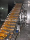 Produtos hortícolas e frutos de tamanho grande transformação numa sala fria