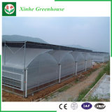 Estufa de vidro de Venlo da estufa econômica da película para Growing vegetal