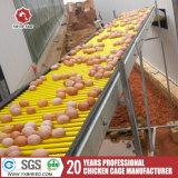 La couche automatique de poulet met en cage A3l90