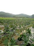 Fertilizzante del terreno di Unigrow per qualsiasi piantatura di verdure fogliare