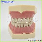 歯科柔らかいゴムの取り外し可能な28PCS歯モデルHesperus互換性のあるNissin 200