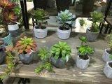 Les meilleures centrales artificielles de vente de Gu-Jys-Succulent025 succulent