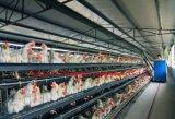 Las aves de corral Confined de la estructura de acero contienen/casa de pollo