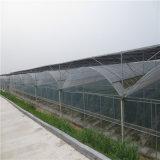 Groene Huis van de Plastic Film van China het Professionele voor Peper