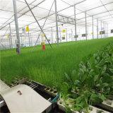 공장 가격 Venlo 가장 싼 상업적인 유리제 온실