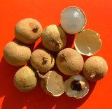 乾燥されたLonganのパルプのエキスの/Longのパルプのエキスまたは仮種皮のLonganのエキスの粉