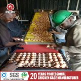 熱く、冷たい電流を通された層の鶏の家禽はアフリカの農場におりに入れる