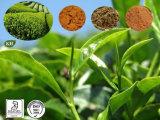 緑茶のエキス、紅茶のエキス、Oolongの茶エキス、即刻の緑茶、ポリフェノール