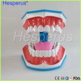 Modello di spazzolatura di denti con l'allievo del dentista dei bambini della linguetta che impara modello