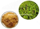 Extracto Forskolin 8%~ el 20% de Forskohlii del coleo de la alta calidad de la pérdida de peso