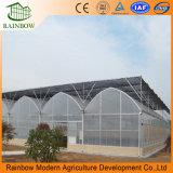 Лидер продаж среди коммерческих Multi-Span пластиковую пленку для выращивания овощей выбросов парниковых газов