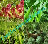 Sulfaat van het Kalium van het Poeder van het Gebruik van de Landbouw van de Zuiverheid van 98% het Witte