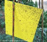 Scheda degli assassini dell'insetto della mosca, forte adesivo, inodoro,