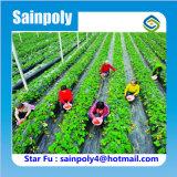 Парник полиэтиленовой пленки Multi-Пяди для расти клубники