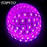 5050 indicatore luminoso di striscia flessibile di illuminazione di striscia dell'indicatore luminoso di striscia del LED RGB/Ww