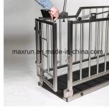 Ganado usar escala galvanizada caliente del ganado de la escala