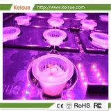 De plus en plus des plantes de culture hydroponique de bac avec le système de culture
