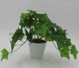 Verdadero toque inglés ivy para decoración de interiores
