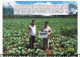いろいろな種類の野菜はUnigrowの土肥料と扱った