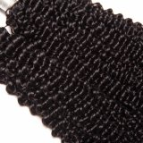 Malaysian 곱슬머리 직물 머리는 100%년 Remy 사람의 모발 연장을 묶는다