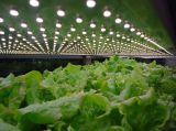 Kleine eingemachte Pflanzen und Succulents wachsen Licht