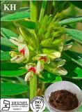 10:1 dell'estratto di Capitata del trifoglio del Giappone, 12:1, flavoni 6% da UV (84837-05-8)