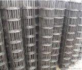 Rete metallica quadrata galvanizzata della maglia