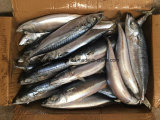 De beste Bevroren Vreedzame Makreel van de Versheid Vissen