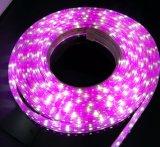 屋外の効果ライト防水屈曲5050 RGBW Rgbww LEDのストリップ