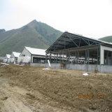 Edificio con marco de acero prefabricado del cerdo del diseño agradable para la venta